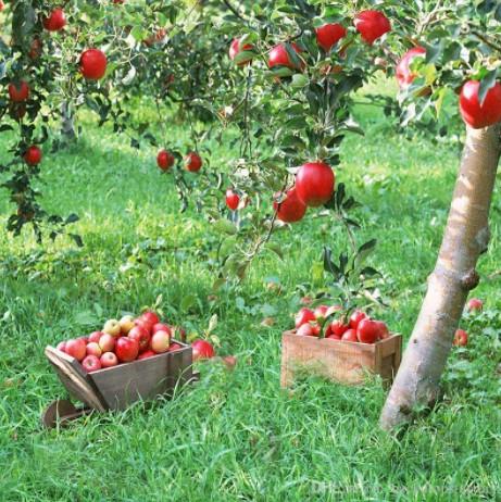 Devlet Destekli Meyve Bahçesi Hibesi