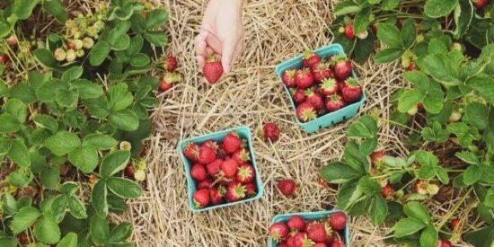 Devlet Destekli Meyve Bahçesi Hibesi Şartları 2021 (GÜNCEL)