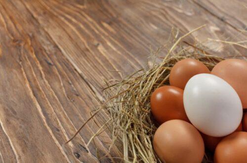 Toptan Köy Yumurtası Alan Firmalar 2021 (Organik Yumurta Satışı)