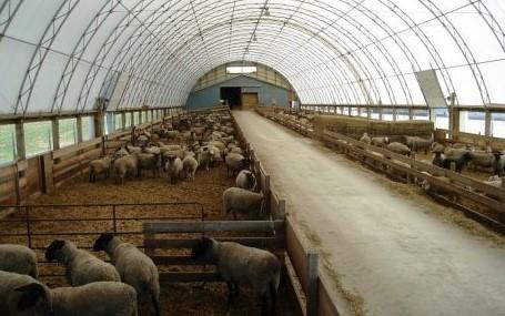 Prefabrik Küçükbaş Ahır Fiyatları 2021 Koyun Çiftliği Kurulum Hesaplaması