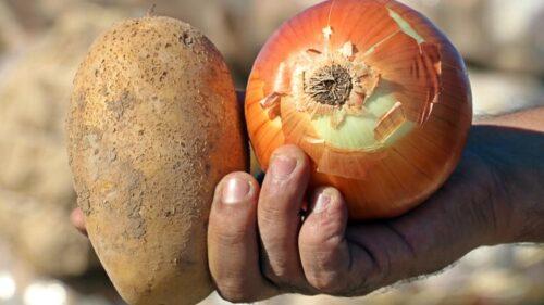 Patates Soğan Yardımı Başvurusu 2021 Nasıl Yapılır?